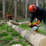Découpe de troncs d'arbre par les bac pro forêt en Sarthe